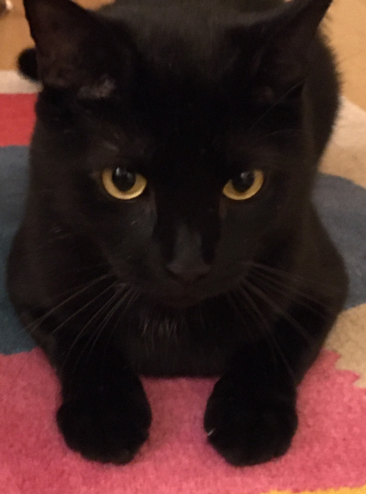 WINTER DANGER TO CATS
