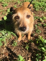 Millie - 6 Years Old - Jack Russell Cross